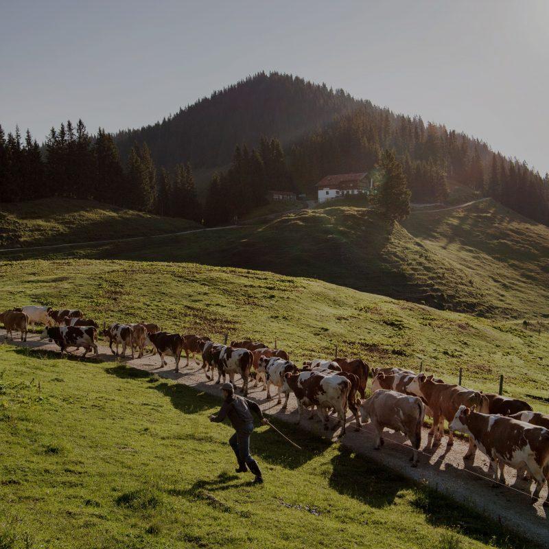 Schätze der alpinen  Landwirtschaft